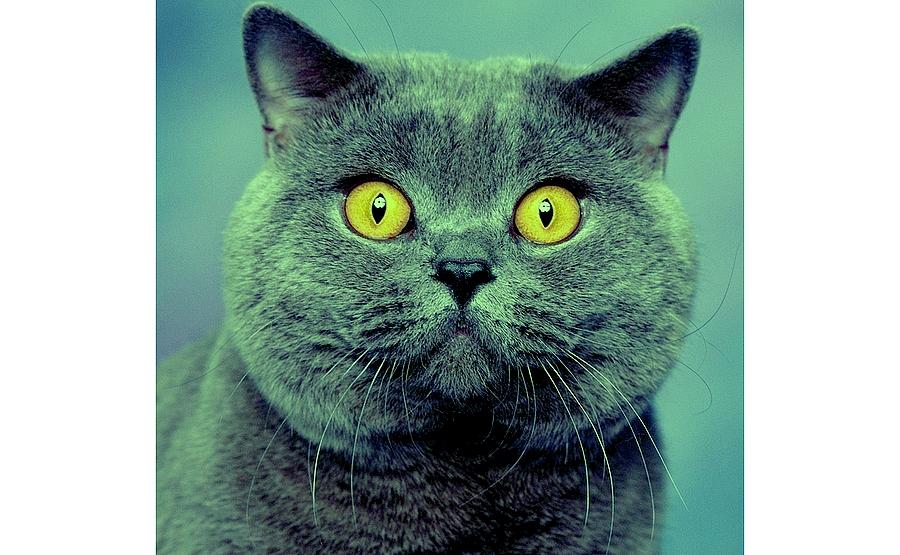 Wsparcie dla opiekunów kotów wolno żyjących