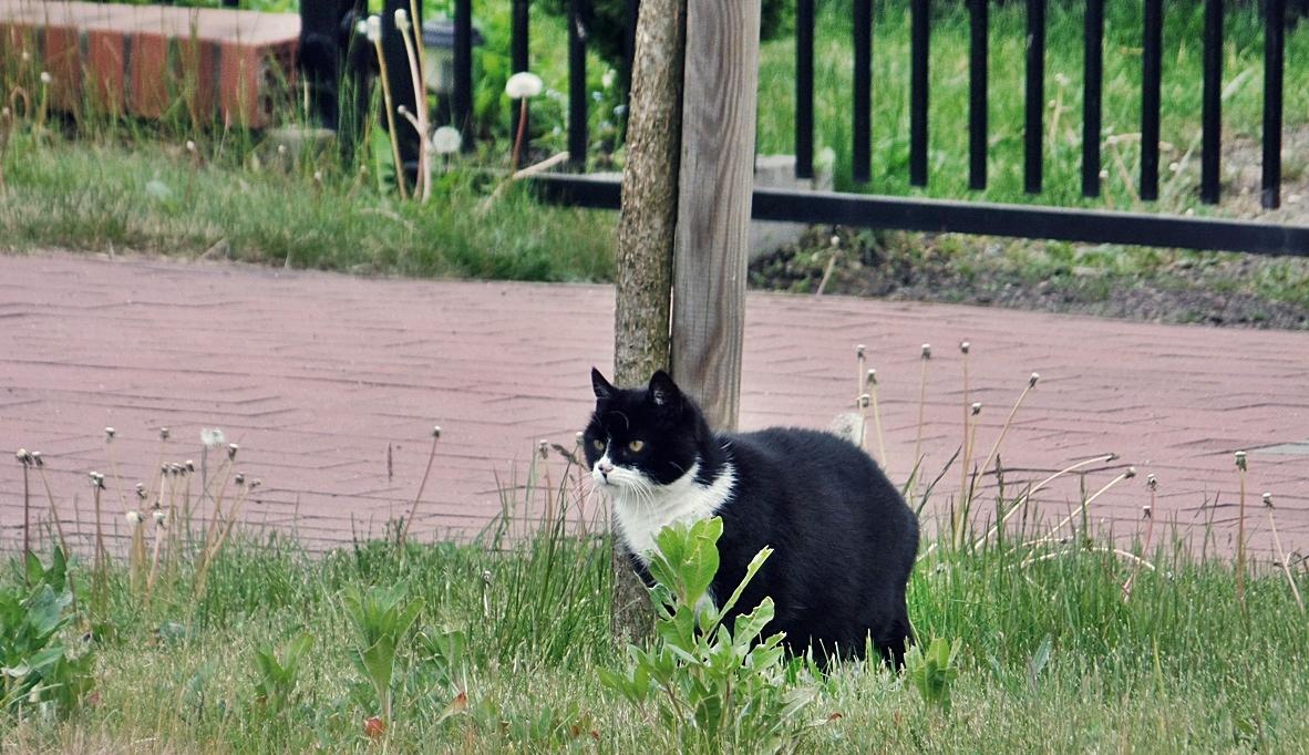 Kociaki pod opieką, Miasto Białogard